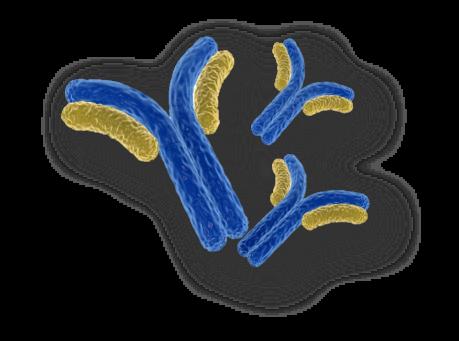 Catalogue Antibody Production